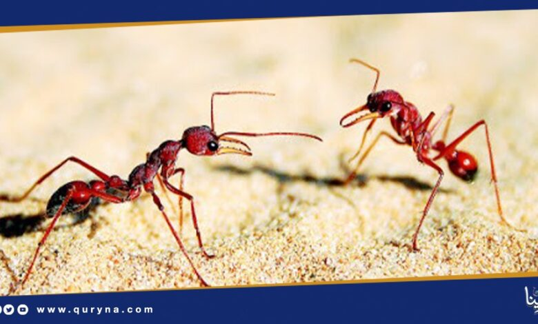 Photo of قصة سيدنا سليمان مع النمل