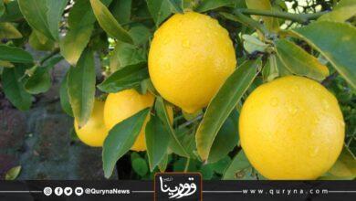 Photo of فوائد الليمون لصحة الجسم