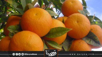 Photo of فوائد البرتقال الصحية للوقاية من فيروس كورونا