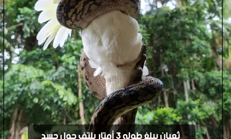 Photo of بالصور   ثعبان يبلغ طوله 3 أمتار يلتف حول جسد ببغاء كوكاتو أبيض بأستراليا قبل التهامه