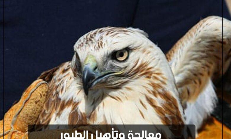 Photo of بالصور | معالجة وتأهيل الطيور الجارحة لإنقاذها من شبح الانقراض