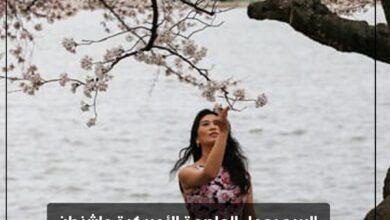 Photo of الربيع يجمل العاصمة الأمريكية واشنطن حيث تتفتح أشجار الكرز وتزهر الحدائق