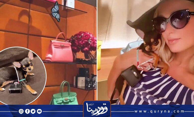 Photo of باريس هيلتون تشتري حقيبة يد لكلبها الصغير بـ5500 دولار ..صورة