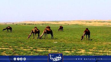 Photo of قصة من التراث.. صـرة النجـع