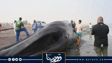 Photo of صدمة قاتلة تودي بحياة حوت أزرق على شاطئ أفريقي