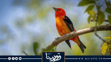 Photo of تعال نغرد ويا الطير تعال نقول صباح الخير