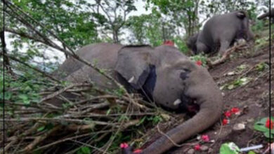 Photo of صاعقة برق تقتل 18 فيلا في ثوان